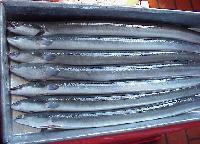 Frozen Eel Fish