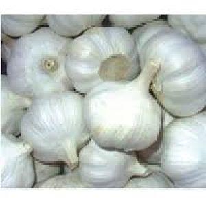 Garlic Seeds