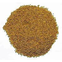 Barseem Clover Seeds