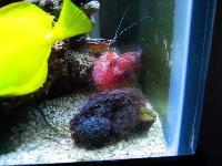 Neptune Grouper Fish And Aquarium