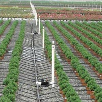 Drip Irrigation & Fertigation System