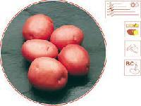 L R Potatoes