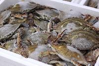 Frozen Crab