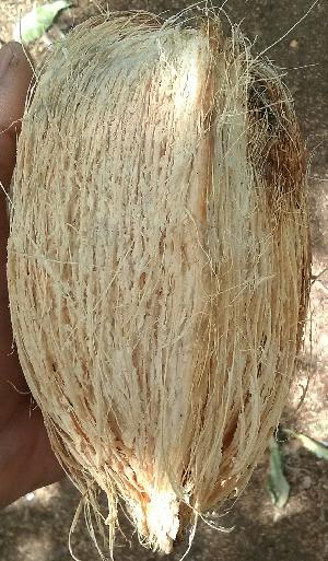 4 patta coconut