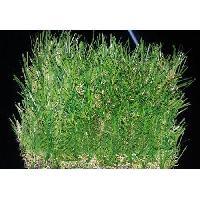 Lawn Artificial Grass