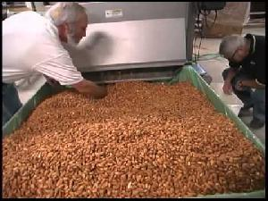 Almond Processing Machine