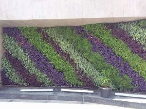 Indoor & Outdoor Vertical Garden Maintenance Services