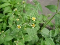 Ayurvedic Medicine Plants