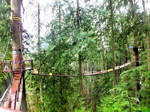 Rope Suspension Bridge Design Services