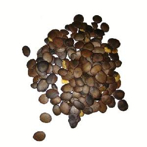 Akino Herbal Seeds