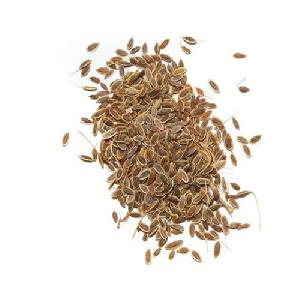 Dill Herbal Seeds