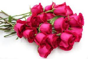 Fresh Pink Cut Rose Flowers