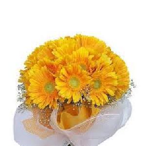 Fresh Yellow Gerbera Flowers