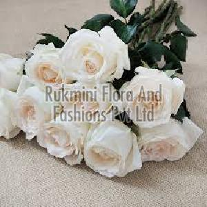 Fresh White Cut Rose Flowers