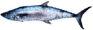 vanjaram fish