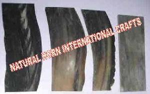 Water  Buffalo Horn Plates