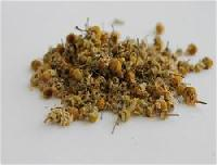 Indian Chamomile