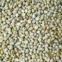 Bajra ( Green Millet )