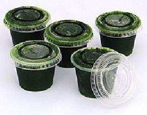 Kedia Organic Wheat Grass Juice - 400ml