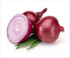 Fresh Onion 04