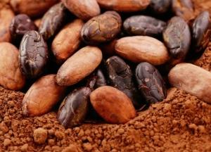 Organic Cocoa Products