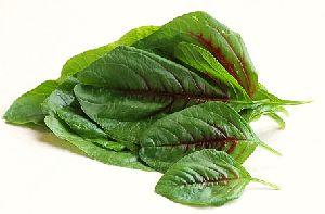 Green Amaranth Leaves
