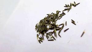 Zindagi Stevia Seeds