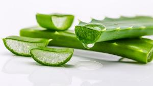 Fresh Aloe Vera Leaves