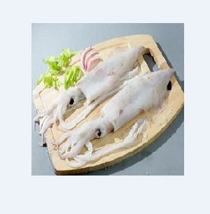 Fresh Squid Fish