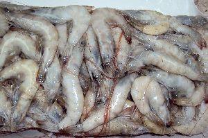 Fresh Vannamei Shrimps