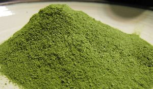 MORINGA DRIED LEAF/ MORINGA OLEIFERA/POWDER