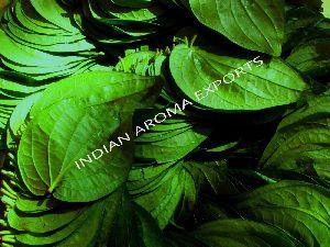 Natural Betel Leaf Essential Oil