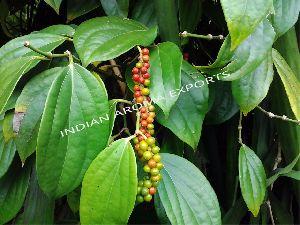 Natural Black Pepper Essential Oil