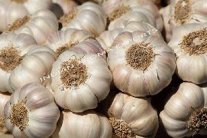 Natural Garlic Essential Oil