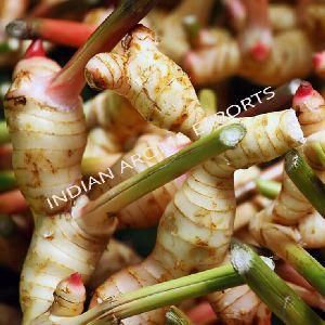 Natural Ginger Essential Oil