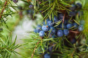 Natural Juniper Berry Essential Oil