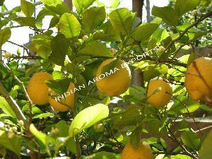 Natural Lemon Essential Oil