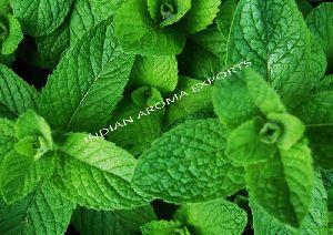 Natural Menthol Essential Oil