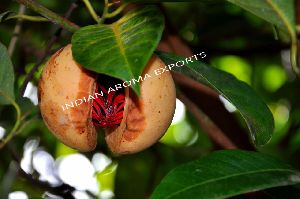 Natural Nutmeg Essential Oil