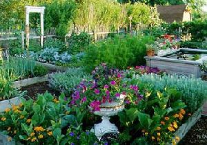 Kitchen Garden Installation Services