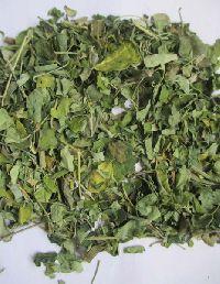 Moringa Oleifera Dry Leaf