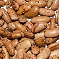 Kidney Beans
