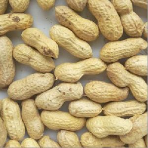 Hps Shelled Groundnuts