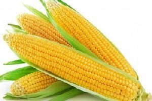 Fine Sweet Corn