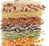 Cereal Grains Seeds