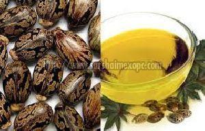 Castor Seeds & Oil