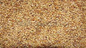Foxtail Millets