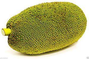 Fresh Jackfruit