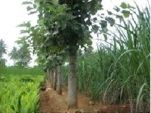 Organic Farming Training