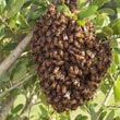 Beehive Control Services